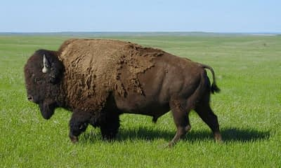The Future is Bright for Bison Trails as Series A Nets $25.5M