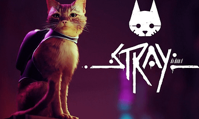 "What We Know About ""Stray,"" The Video Game So Far"