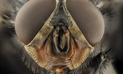Researchers Create Compound Eye Based on Insects