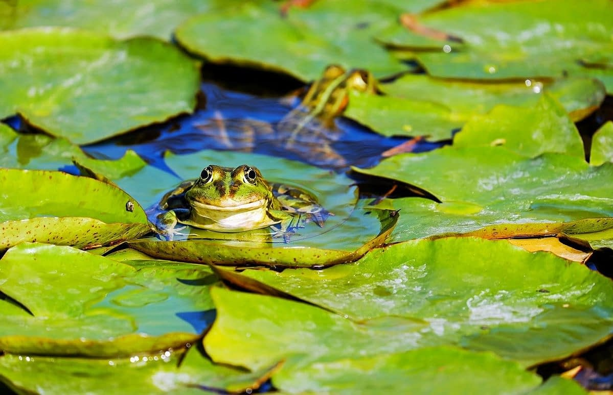 Scientists Repurpose Living Frog Cells to Develop World's First Living Robot
