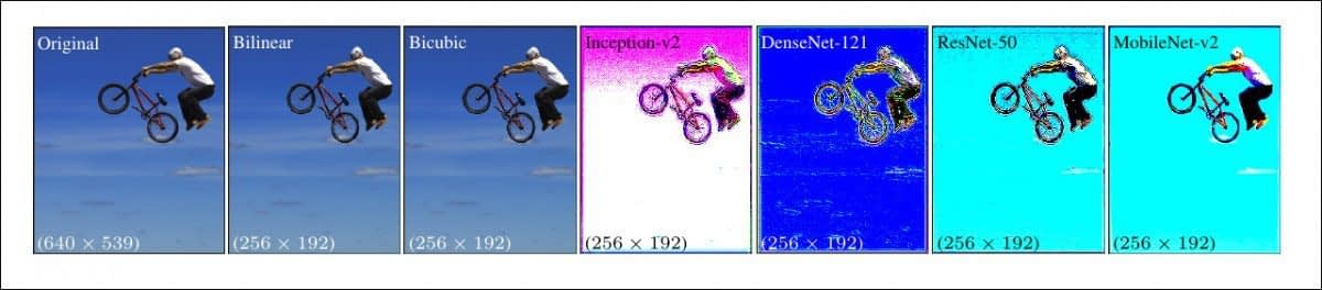 The new method applied across four networks – Inception V2; DenseNet-121; ResNet-50; and MobileNet-V2. The results of the Google Research image downsampling/resizing method produces images with obvious pixel aggregation, anticipating the key features that will be discerned during the training process.