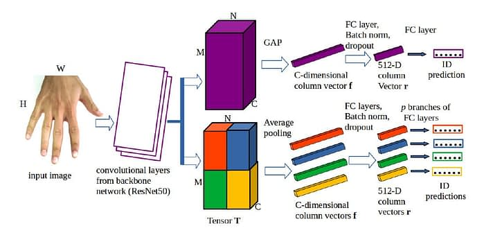 In GPA-Net, two distinct 3D tensors (global and local) are obtained by passing the source image through stacked convolutional layers on the ResNet50 backbone network. Each of the analytical avenues will make an identity prediction. Source: https://arxiv.org/pdf/2101.05260.pdf