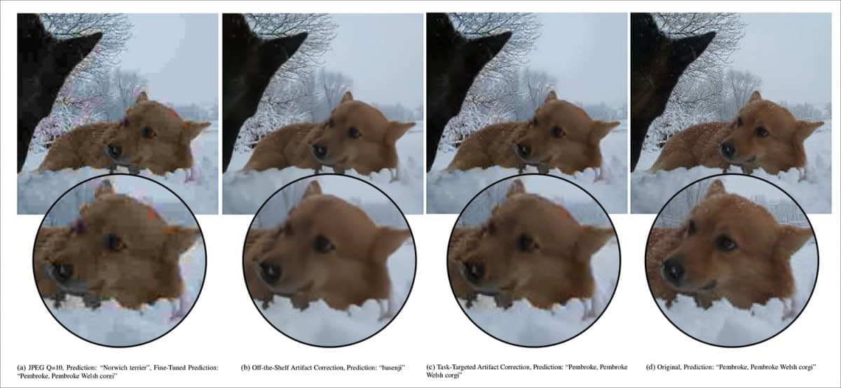 A photo of a dog from the 2018 MobileNetV2 dataset. At quality 10 (left), a classification system fails to identify the correct breed 'Pembroke Welsh Corgi', instead guessing 'Norwich terrier' (the system already knows this is a photo of a dog, but not the breed); second from left, an off-the-shelf JPEG artifact-corrected version of the image again fails to identify the correct breed; second from right, targeted artifact correction restores the correct classification; and right, the original photo, correctly classified. Source: https://arxiv.org/pdf/2011.08932.pdf