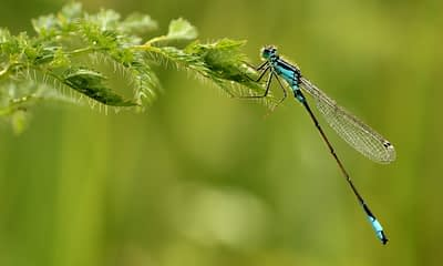 Dragonflies and Missile Defense Systems