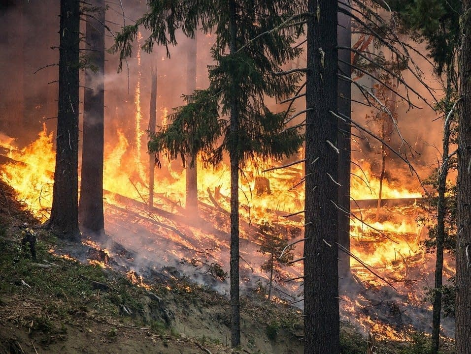 AI Can Help Make Wildfires Quicker To Spot And Easier To Fight